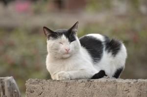cat-2682112_960_720